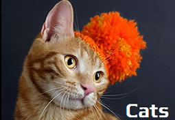 Adopt a cat from Saratoga County Animal Shelter.